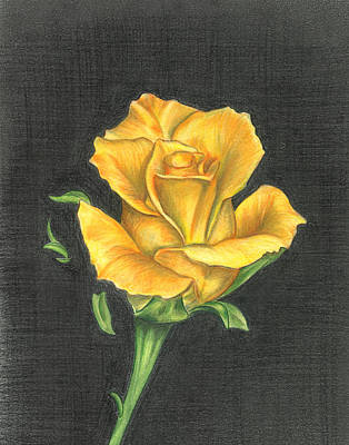 Drawing - Yellow Rose by Troy Levesque