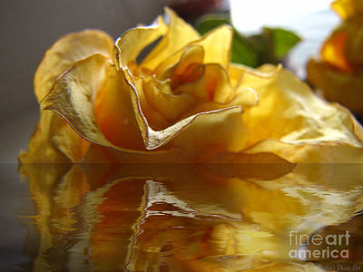Photograph - Yellow Rose Wet And Dry by Debbie Portwood