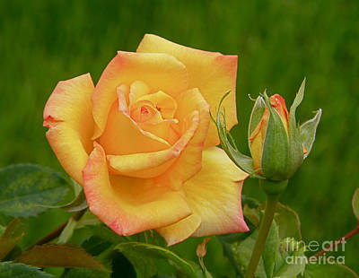 Art Print featuring the photograph Yellow Rose With Bud by Debby Pueschel