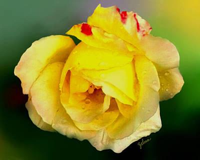 Yellow Rose Art Print by Zelma Hensel