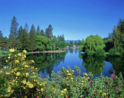 Deschutes Photograph - Yellow Roses By Mirror Pond by Panoramic Images
