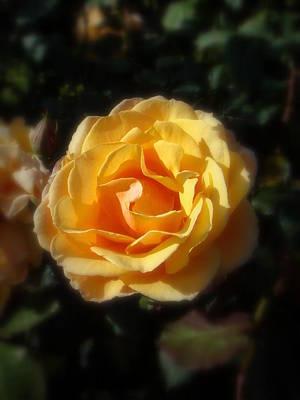 Photograph - Yellow Roses by Mr Photojimsf