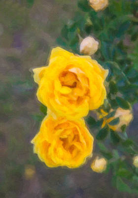 Yellow Roses On A Bush Art Print by Omaste Witkowski