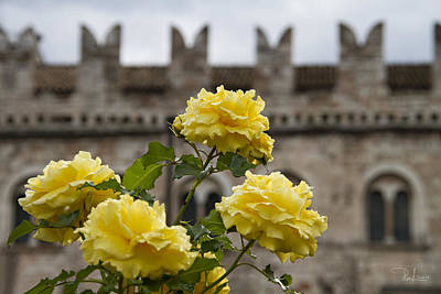 Photograph - Yellow Roses by Raffaella Lunelli