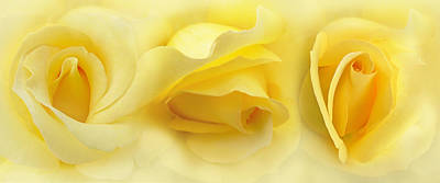 Yellow Roses Triptych Panel Art Print by Jennie Marie Schell