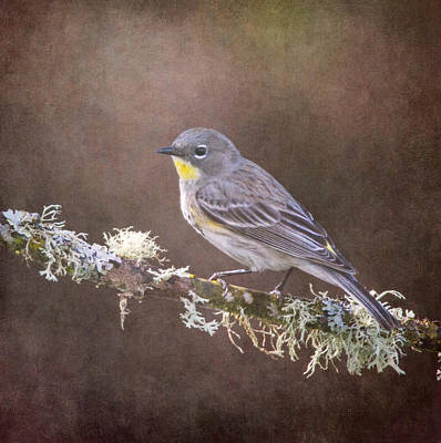 Photograph - Yellow-rumped Warbler by Angie Vogel
