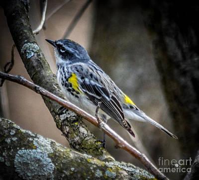 Pop Art - Yellow Rumped Warbler by Ronald Grogan