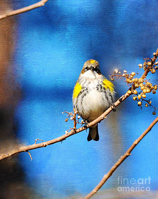 Photograph - Yellow-rumped Warbler Texture by Olivia Hardwicke