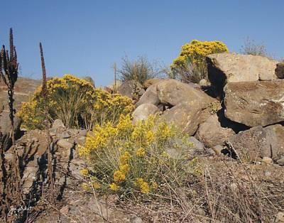 Photograph - Yellow Sage by Joe Duket
