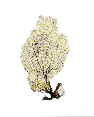 Beachcombing Photograph - Yellow Sea Fan by Jennifer Booher