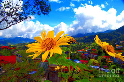 Photograph - Yellow Singapore Daisy by Christopher Shellhammer