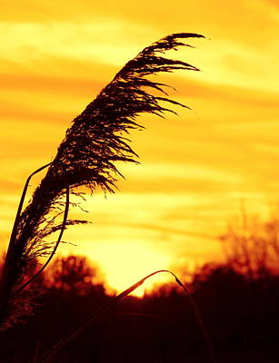 Photograph - Yellow Sky by Rima Biswas