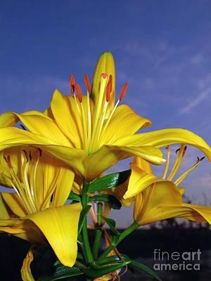 Yellow Spring  Art Print