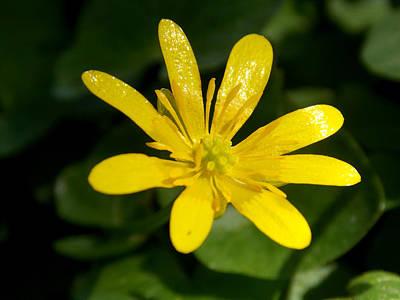 Photograph - Yellow Splash by Chris Cox