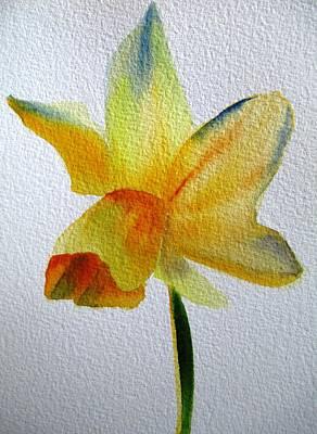 Yellow Spring Daffodil Art Print by Sacha Grossel