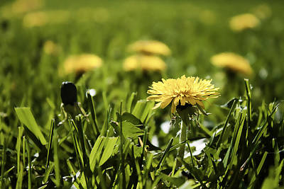 Photograph - Yellow Spring by Milena Ilieva