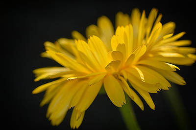 Photograph - Yellow Summer by Dennis James