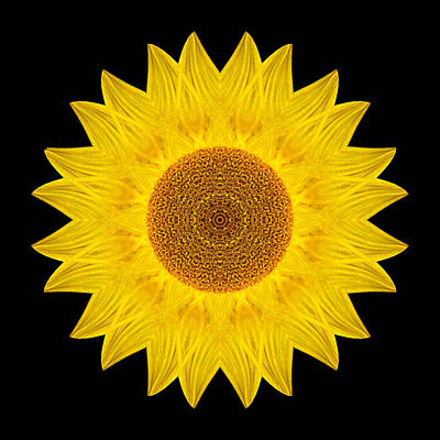 Photograph - Yellow Sunflower Ix Flower Mandala by David J Bookbinder