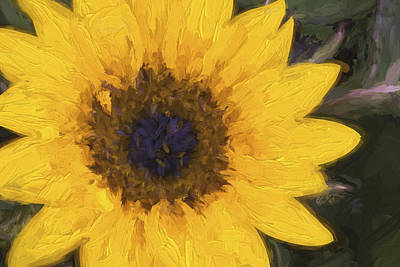 Yellow Sunflower Painterly Art Print by Carol Leigh