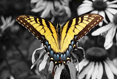Insects Photograph - Yellow Swallowtail Butterfly by Sumit Mehndiratta