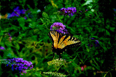 Manipulation Photograph - Yellow Swallowtail - Featured In Wildlife Group by EricaMaxine  Price