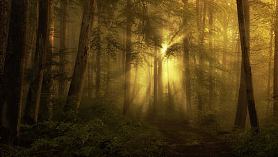 Forest Light Photograph - Yellow - The Bigger Picture by Norbert Maier