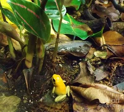Yellow Tree Frog Art Print