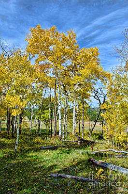 Fort Collins Photograph - Yellow Tree by Keith Ducker