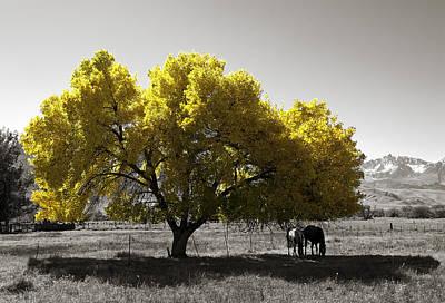 Yellow Tree Original