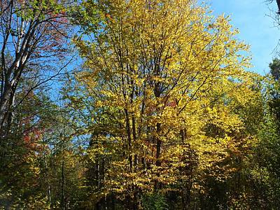 Photograph - Yellow Trees by Gene Cyr
