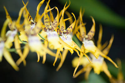 Photograph - Yellow Tropical Flower by Alex Grichenko