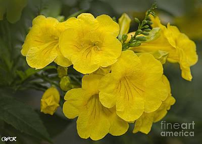 Photograph - Yellow Trumpets by Wanda Krack