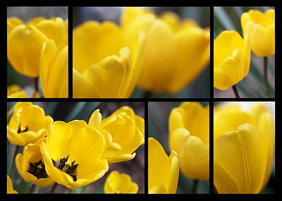 Photograph - Yellow  Tulip Flowers Collage by Jennie Marie Schell