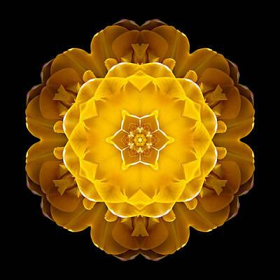 Yellow Tulip II Flower Mandala Art Print