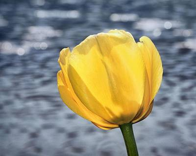 Art Print featuring the photograph Yellow Tulip Shimmering Water by Tracie Kaska