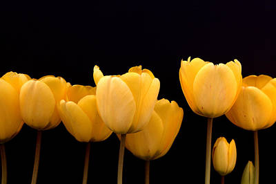 Abstract Graphics - Yellow Tulips by Alexander Fedin