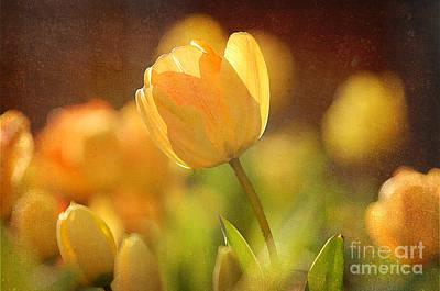 Spring Bulbs Digital Art - Yellow Tulips by Bedros Awak