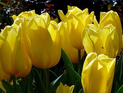 Photograph - Yellow Tulips Close by Jeff Lowe