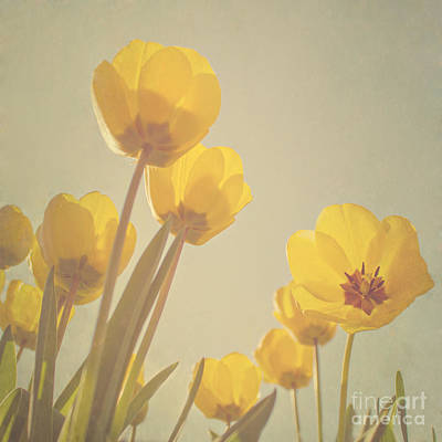 Yellow Digital Art - Yellow Tulips by Diana Kraleva