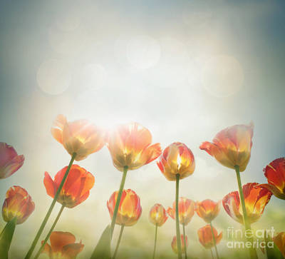 Yellow Tulips Print by Mythja  Photography