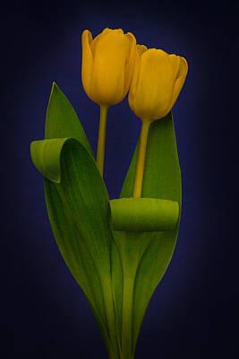 Decorative Painting - Yellow Tulips On A Blue Background by Eva Kondzialkiewicz