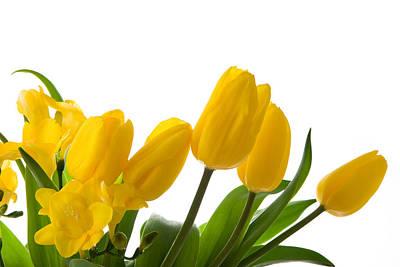 Yellow Tulips On White Art Print by Anna Kaminska