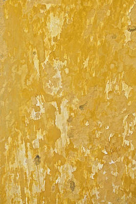 Painting - Yellow Wall Of Aruba by David Letts