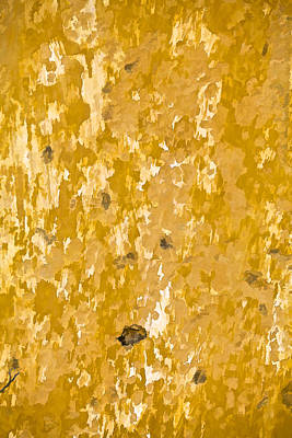 Photograph - Yellow Wall Of Aruba II by David Letts