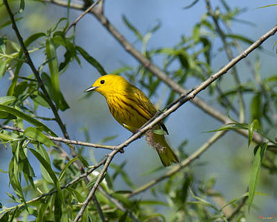 Photograph - Yellow Warbler Dsb221 by Gerry Gantt