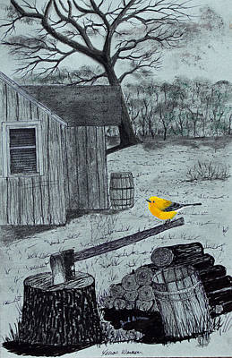 Drawing - Yellow Warbler by Jack G  Brauer