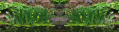 Photograph - Yellow Water Iris by Les Palenik