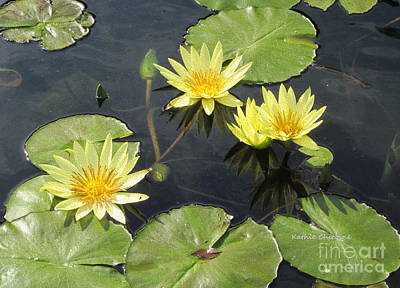 Photograph - Yellow Waterlilies by Kathie Chicoine