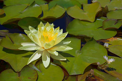 Mixed Media - Yellow Waterlily by Cliff Wassmann