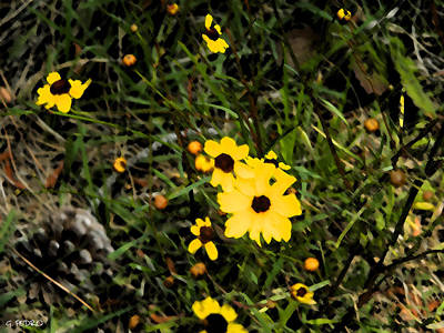 Painting - Yellow Wild Flowers by George Pedro